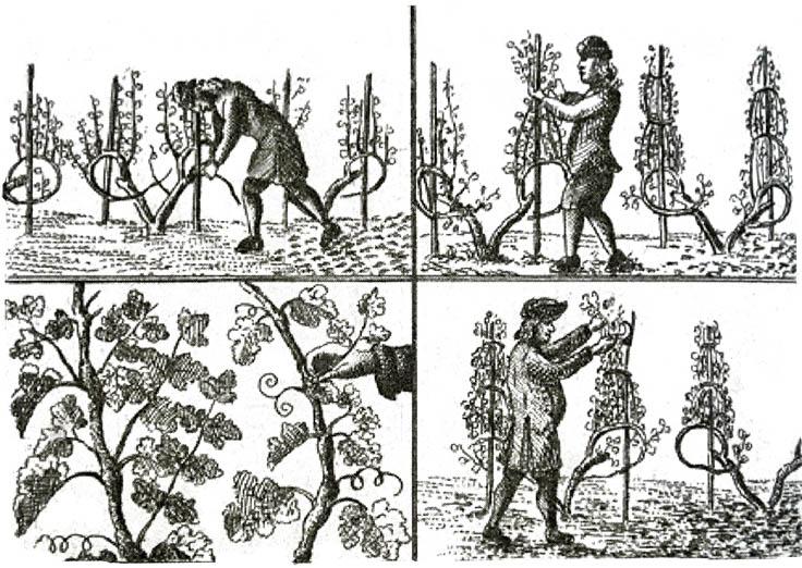 Travaux de la vigne (La vie des villageois au XVIIIe siècle G. Thoquet).