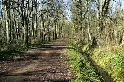 Forêt du Domaine du Château des Dames